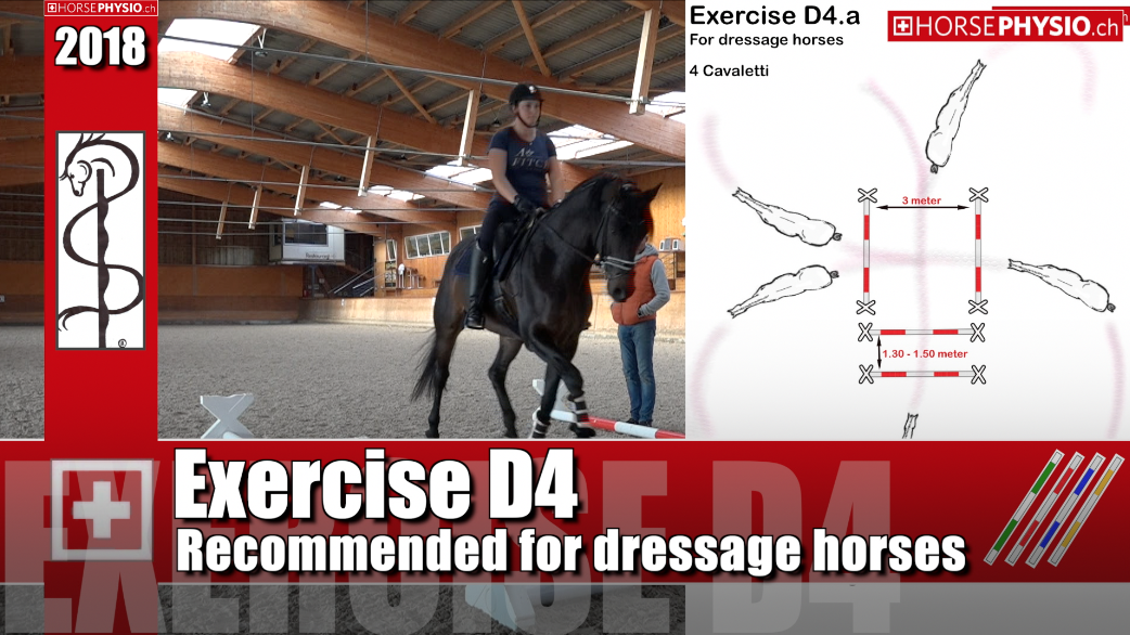 Exercise D4 Special for Dressage Horses