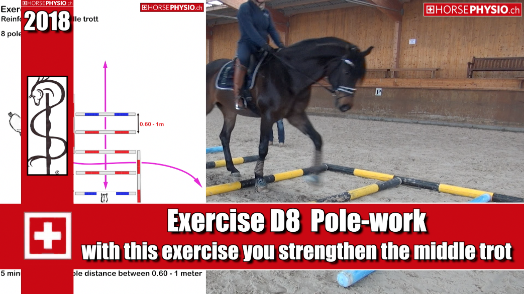Exercise D8 reinforces the middle trot