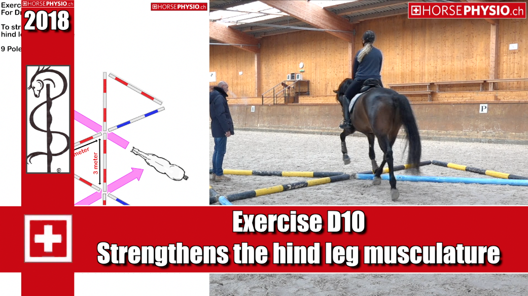Exercise D10 Strengthens the hind leg musculature