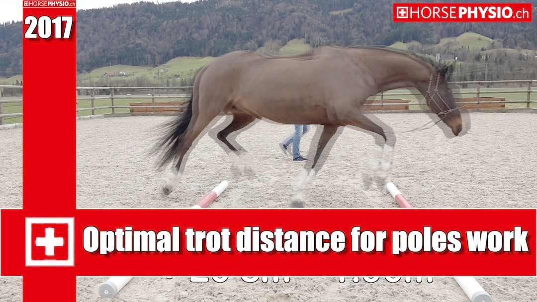 Exact distance with poles set for your individual horse or pony