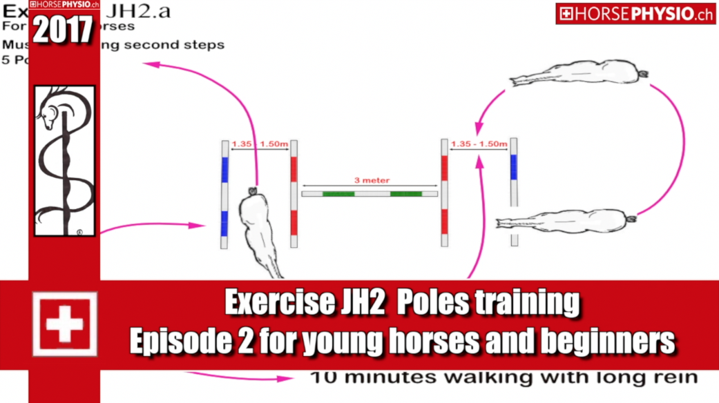 Exercise JH2 build musculature and balance, suitable for young horses and beginners.