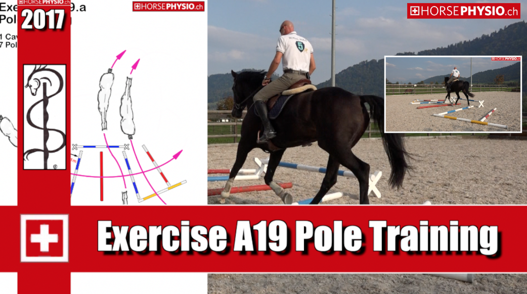 Exercise A19 trust in the Gallop for young horses