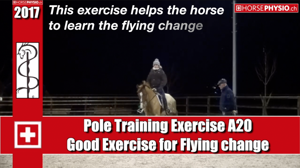 Exercise A20 Flying change