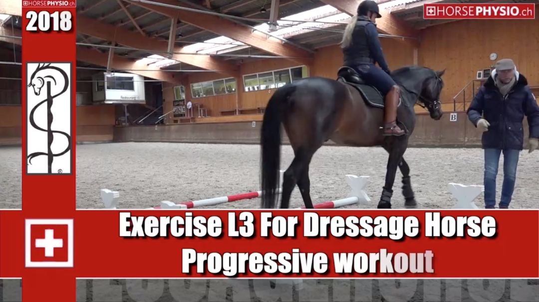 Exercise L3 For Dressage Horse